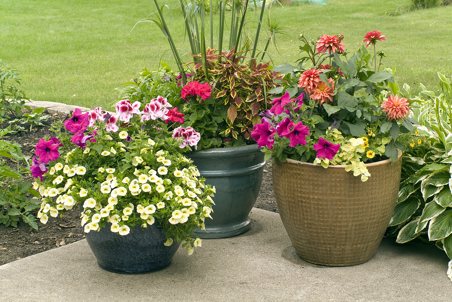 Natural stone Pation with Flower pots