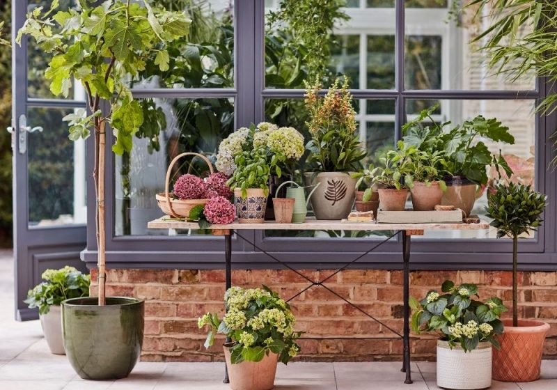 5 Ways To Properly Take Care Of Your Garden This Summer